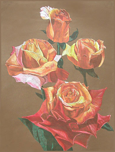 Roses Drawing by K. Fairbanks